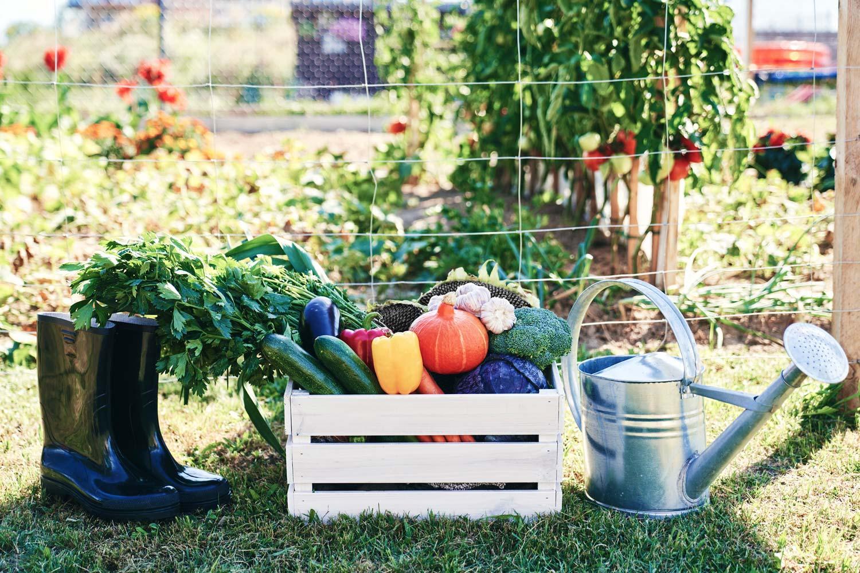 Mon potager - mon jardin